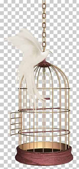 Birdcage Parrot Domestic Canary PNG