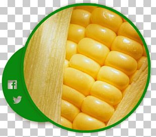 Corn On The Cob Maize Sweet Corn Cereal Corn Kernel PNG