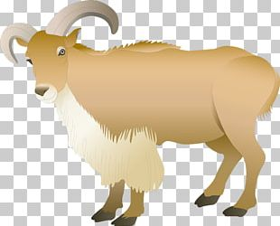 Barbary Sheep Ahuntz Goat Photography PNG