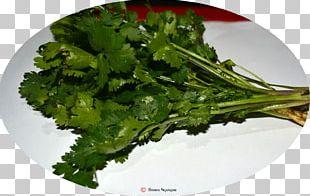 Vegetarian Cuisine Leaf Vegetable Broccoli Rapini PNG