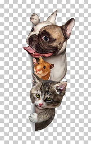 Dog Cat Budgerigar Pet Sitting PNG