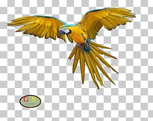 Parrot Bird Macaw Domestic Pigeon Flight PNG
