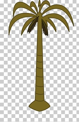 Arecaceae Coconut Date Palm Tree PNG