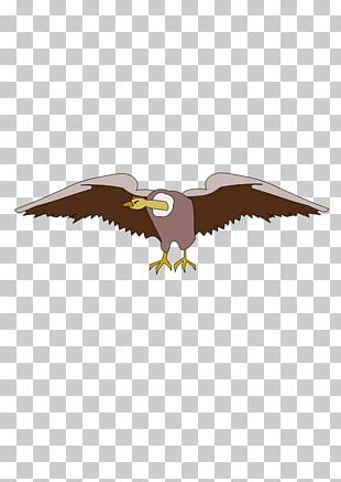 Bald Eagle Graphics Computer Icons Drawing PNG