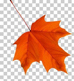Maple Leaf Autumn Leaf Color Desktop PNG