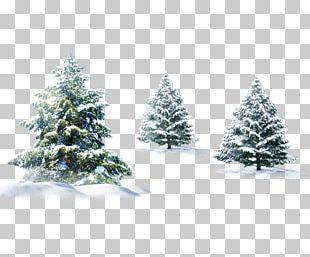 Polar Bear Christmas Tree Christmas Tree PNG