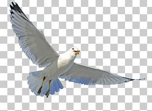 Gulls Bird Parrot Beak Feather PNG