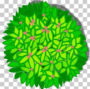 Tree Plant PNG