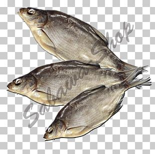 Kipper Oily Fish Sardine Salted Fish Fish Products PNG