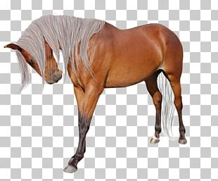 American Paint Horse Andalusian Horse American Miniature Horse Mane Pintabian PNG