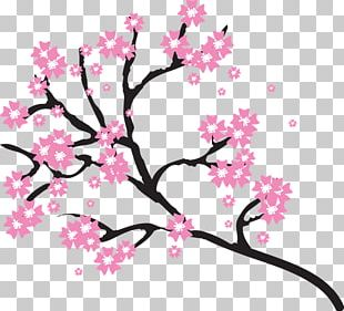 Cherry Blossom Open PNG