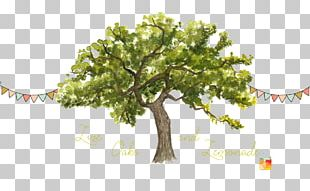 Tree Trunk Watercolor Painting Northern Red Oak PNG