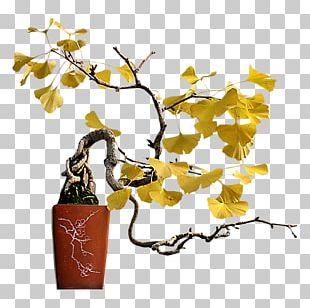 Twig Flowerpot Houseplant Bonsai Plant Stem PNG