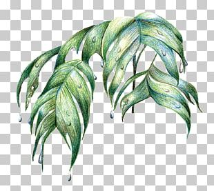 Amazon Rainforest Leaf Tree PNG
