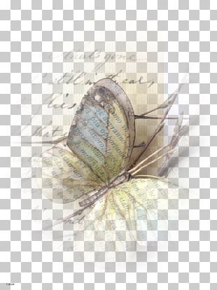 Paper Butterfly Drawing Book Pencil PNG
