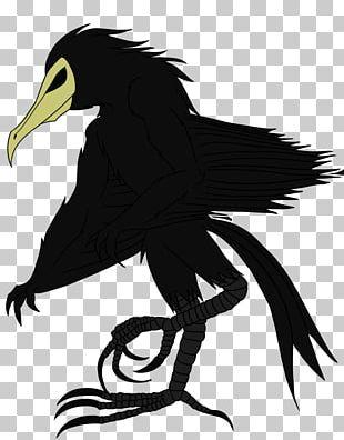 Bird Of Prey Fauna Beak Illustration PNG