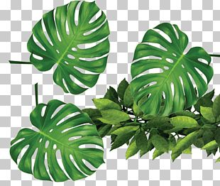 Leaf Template Rxe9sumxe9 PNG