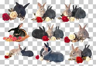 Domestic Rabbit Hare Holland Lop Lionhead Rabbit Netherland Dwarf Rabbit PNG
