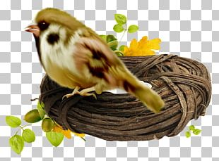 Bird Nest High-definition Television PNG