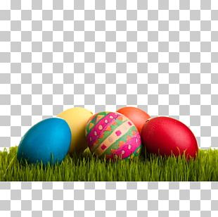 Easter Bunny Chicken Easter Egg PNG