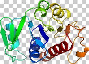 Organism Human Behavior Shoe PNG