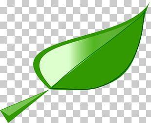 Leaf Lettuce PNG