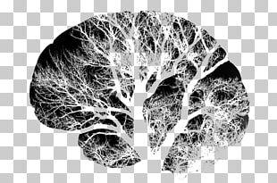 Human Brain Neuron Nervous System PNG