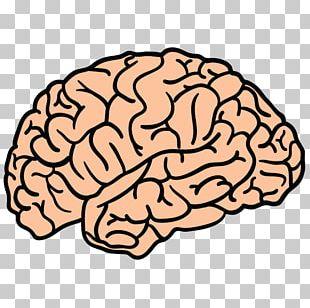 Blue Brain Project Human Brain PNG