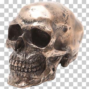 Skull Figurine Human Skeleton Sculpture Resin Casting PNG