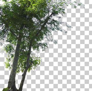 Tree Landscape PNG
