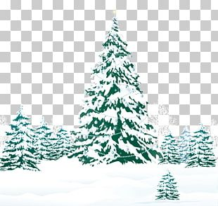 Christmas Tree Pine Snow PNG