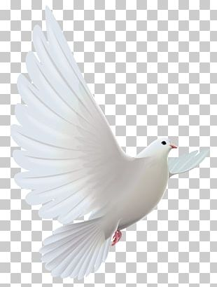 Pigeons And Doves Bird Prayer PNG