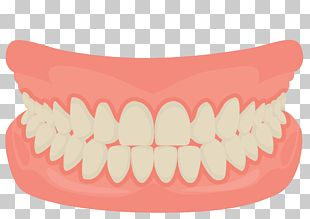 Human Tooth Smile Mouth Dentistry PNG