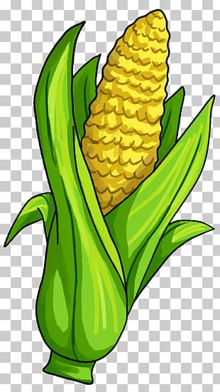 Corn On The Cob Candy Corn Maize Vegetable PNG
