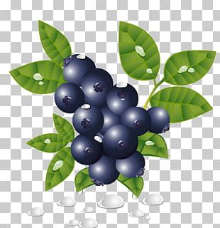 Blueberry PNG