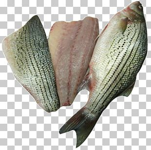 Striped Bass Fish Products Tilapia PNG