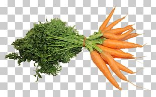 Portable Network Graphics Carrot Computer Icons PNG