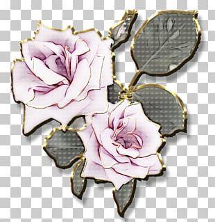 Garden Roses Flower Petal Rose Garden PNG