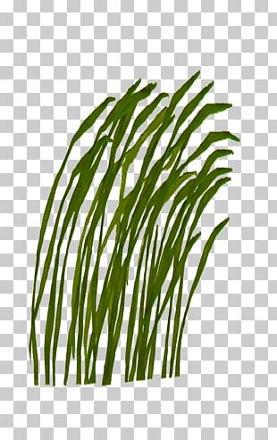Green Color PNG