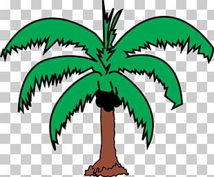 Tree Arecaceae Coconut PNG