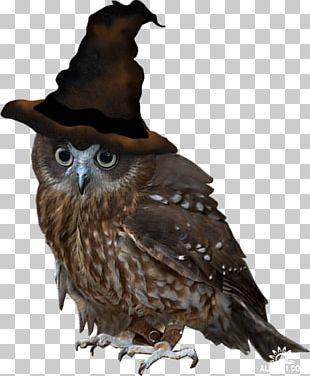 Owl Bird Diary Beak PNG