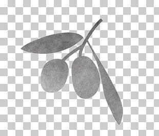 Exfoliation Cream Skin Face Olive Oil PNG