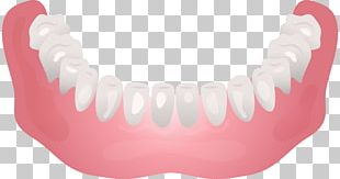 Jaw Mouth Tooth Mandible PNG