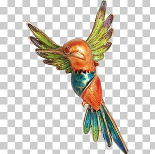 Macaw Beak Feather Parakeet Wing PNG