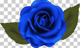 Garden Roses Blue Rose Beach Rose Cabbage Rose PNG