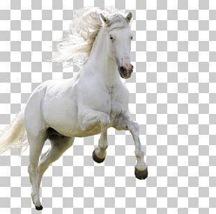 Horse High-definition Television Android PNG