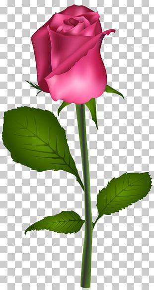 Rose Red Flower PNG