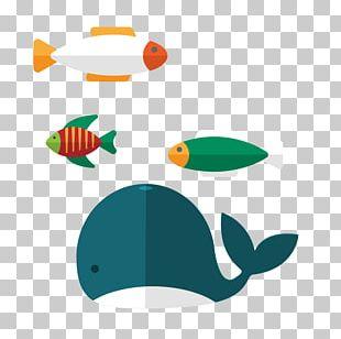 Whale Aquatic Animal PNG