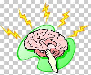 Human Brain Human Body Nervous System PNG