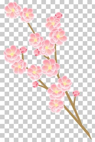 Photography Flower Peach Cherry Blossom PNG